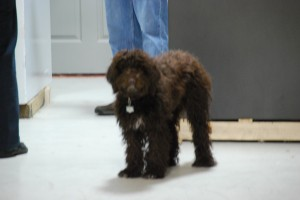 Daisy is the Safe Dog for Nashville Safe House which has the largest showroom of Safes in Tennessee.